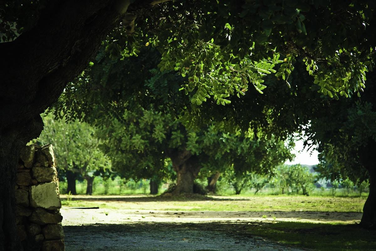 Masseria Baroni Nuovi - Salento Puglia